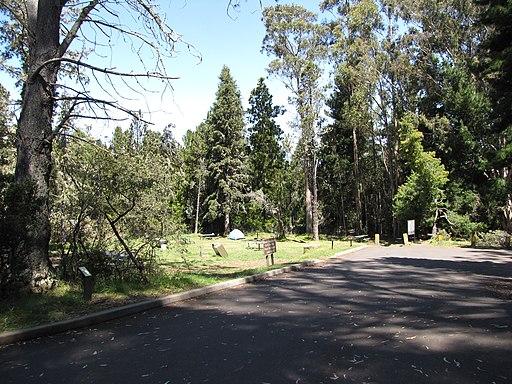 Hosmer Grove Haleakala Maui Shaka Guide