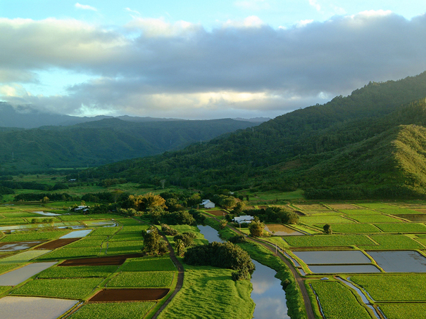 Hanalei Valley Overlook, a Stop on Shaka Guide's North Shore Kauai Driving Tour
