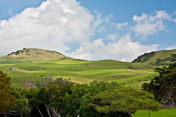 Waimea Hills, Island of Hawaii