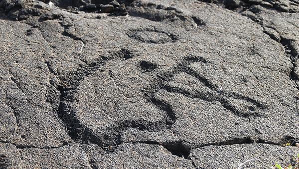 Pu'u Loa Petroglyph Boardwalk
