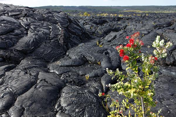 Shaka Guide's Hawaii Volcanoes National Park Tour Itinerary